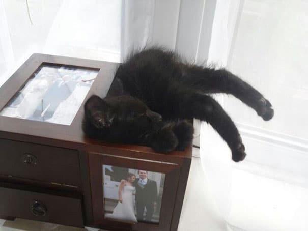 funny-cats-sleeping-weird-positions-151-5c0fa94e8d04c__605.jpg