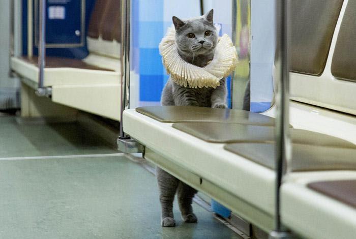 cat700.jpg