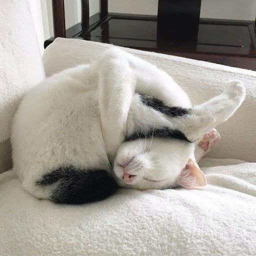 25 фото котов, уснувших в диких и неожиданных позах
