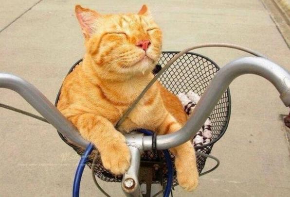 Сообщество Клуб любителей кошек