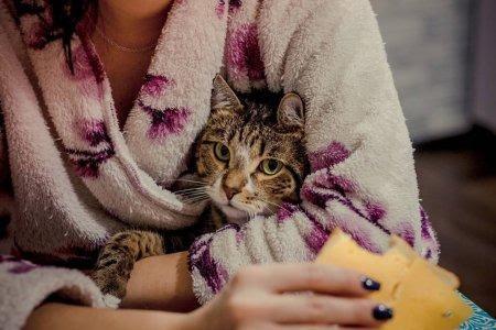 depositphotos_246707972-stock-photo-cat-child-sitting-handles-owner.jpg