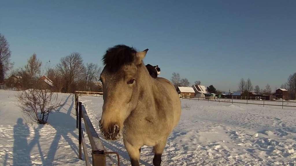 Кот верхом на лошади. - YouTube