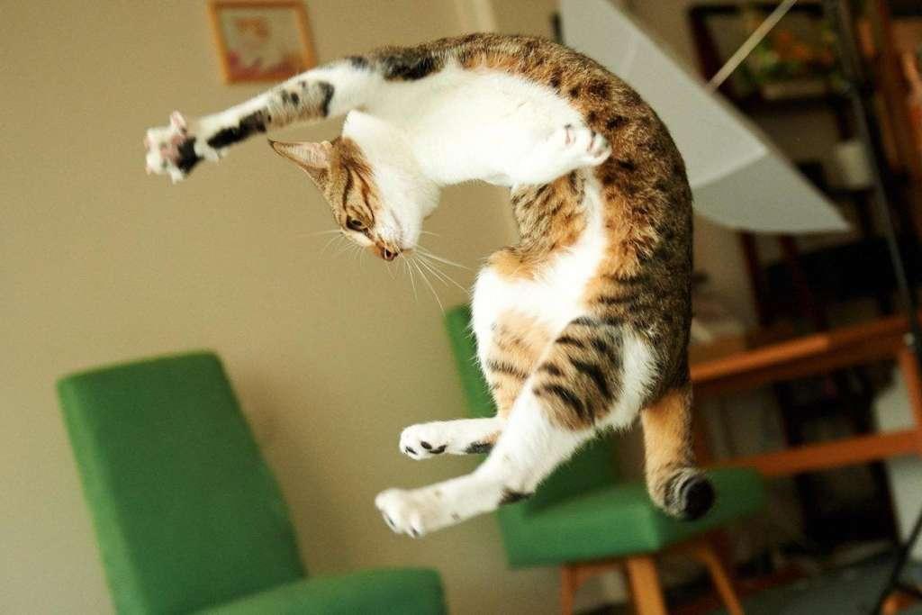 Кот станцевал брейк-данс на лапе и стал звездой сети