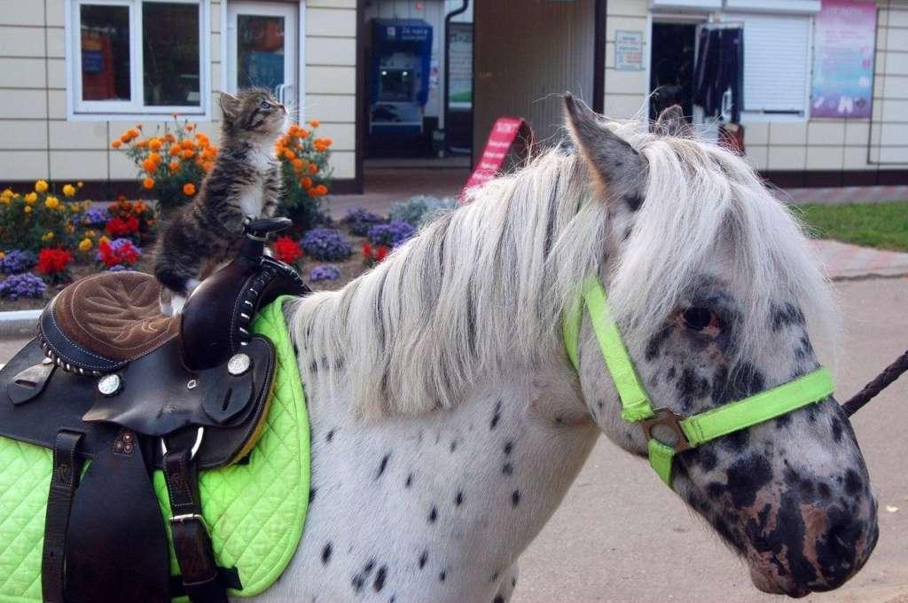 Покатай меня, лошадка! =) | Пикабу