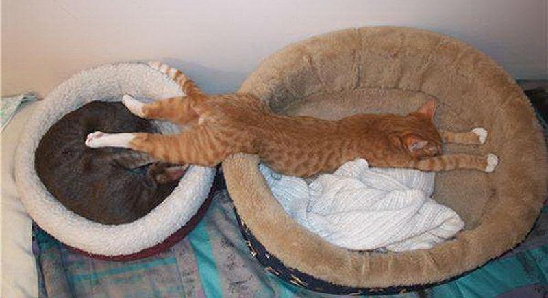 cats-51.jpg