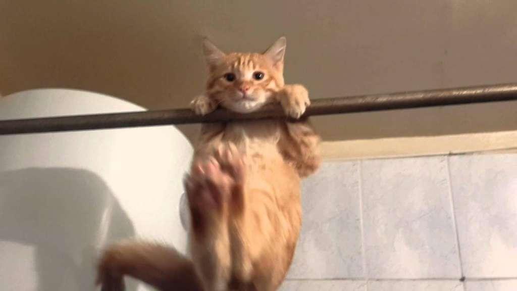 Кот акробат! Часть2 - YouTube