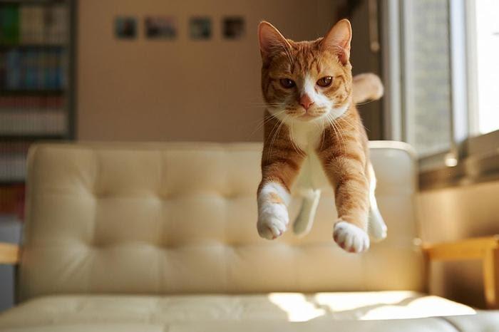 Jumping-Cats-6.jpg