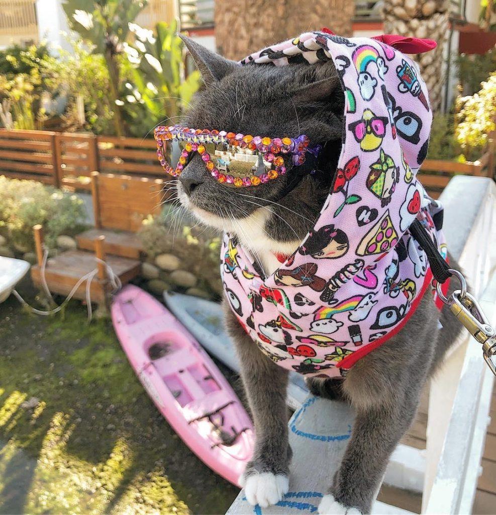 Кошечка по кличке Бублик: стильная, дерзкая и в крутых очках. Немного из жизни первой в мире кошки без век