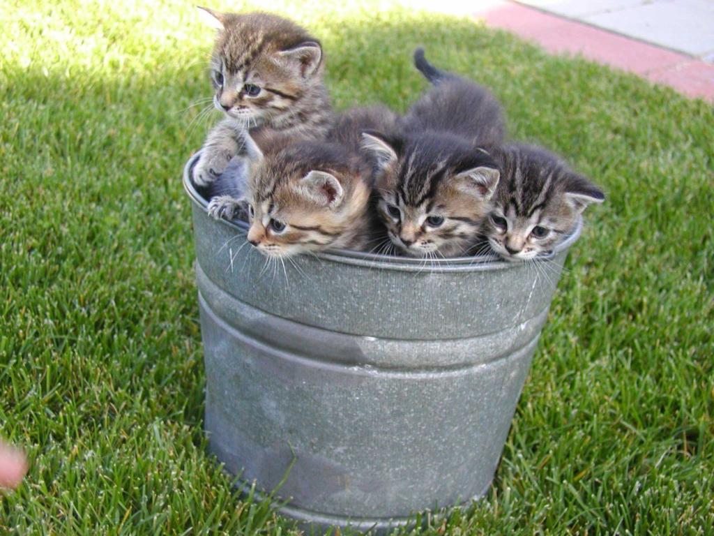 Полные ведерки смеха. Ведра, доверху наполненные котами. Часть 1