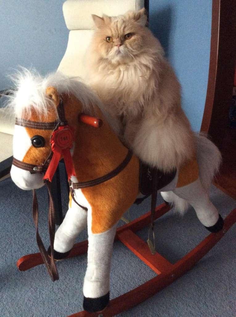 Кража коня | Пикабу