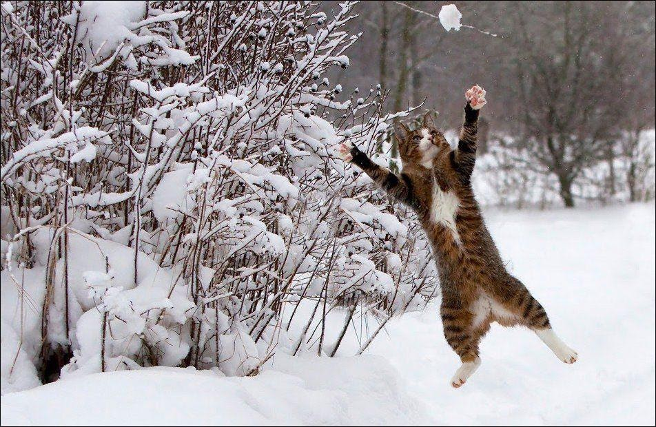 cats_have_snow_02398_012.jpg