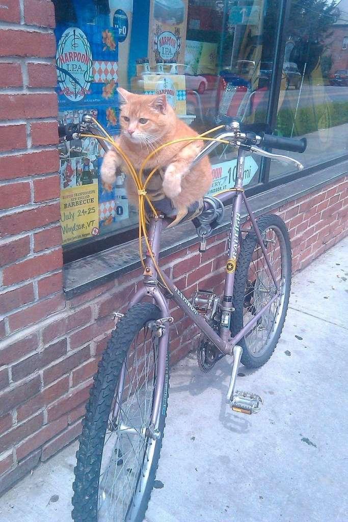 Кот на велосипеде — посты на Fishki