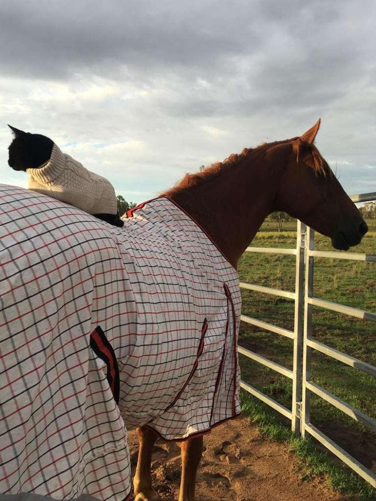 Дружба кошки и лошади помогла собрать деньги для других животных ...