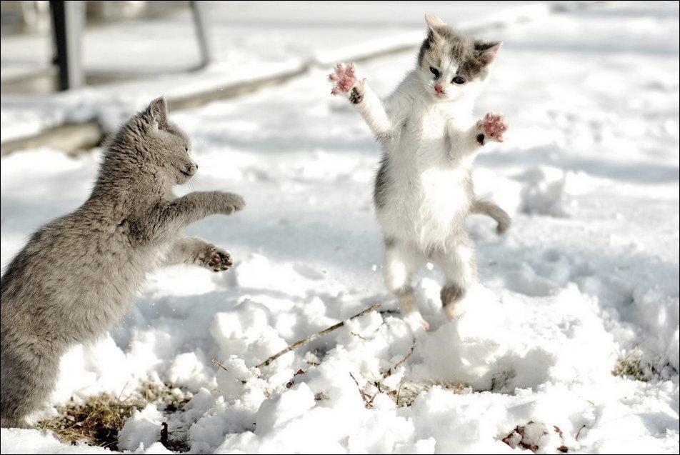 cat-in-snow-005.jpg