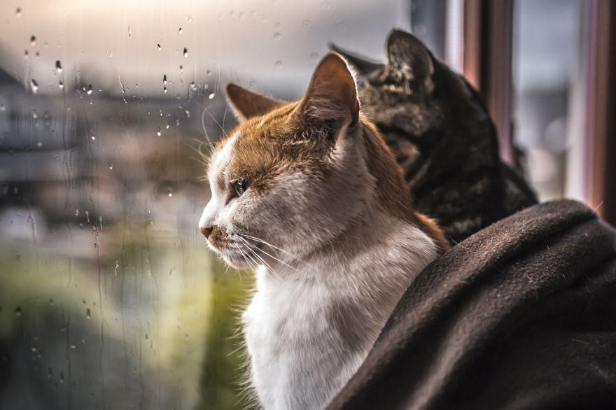 Кошки смотрят в окошки. Забавные пушистики, которые смотрят в окна. Фотоподборка