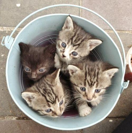 Ведра как единицы измерения котов. Часть вторая. Фотоподборка