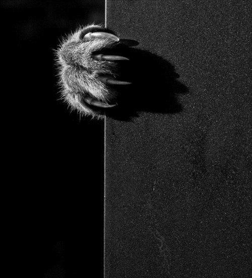 Когтистые лапы. Устрашающие коготки милых кошечек. Фотоподборка