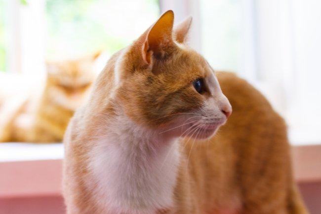 Ахматовские коты: чем мы хуже Эрмитажных? Немного интересного о пушистиках, проживающих в Фонтанном доме