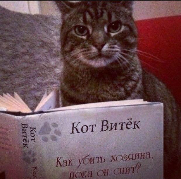 И днем, и ночью кот ученый… Кото – фото подборка питомцев, которые любят почитать Шекспира на досуге