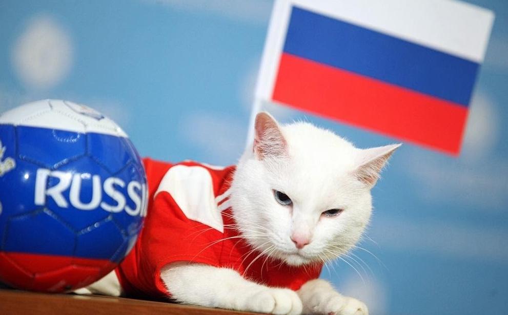 Белоснежный оракул футбола всея Руси: котик Ахилл и его предсказания. Кото - фото