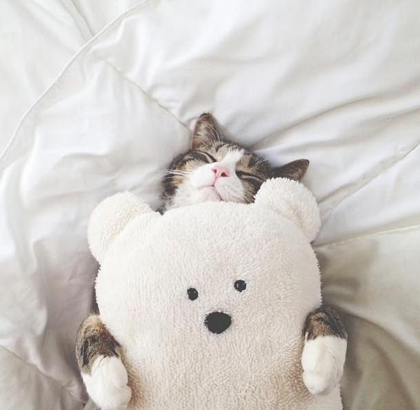 Спят усталые игрушки, и котейки тоже спят… История о том, как пушистики почивают в обнимку с любимыми игрушечками. Кото - фото