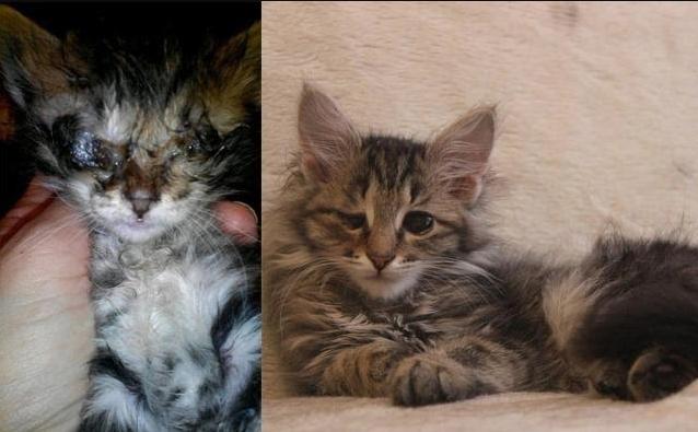 Спасенные котики, часть вторая: метаморфозы любви. Фотоподборка «до» и «после» братьев наших меньших