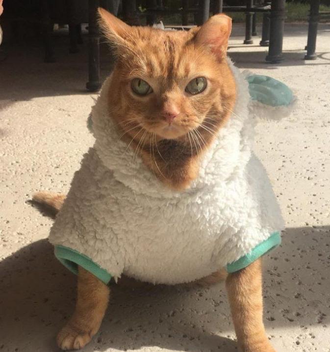 Кот со смешной кличкой Картошка: покоритель сердец с аномально большими глазищами и морем обаяния