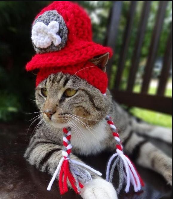 Милые котятки греют ушки в шапочках: креативу владельцев нет предела! Мимишная фотоподборка для ваших улыбок
