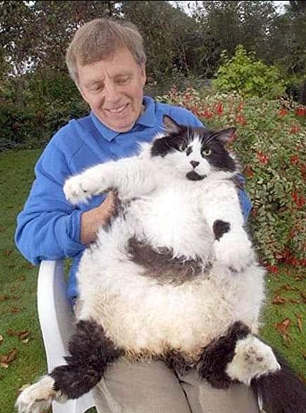 Много мимишности и пухлых котофеев: кото – фото, от которых вы будете в восторге!