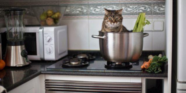 Любопытные носики: а что там такое на плите? Кото – фото милых питомцев, восседающих на кухонных поверхностях