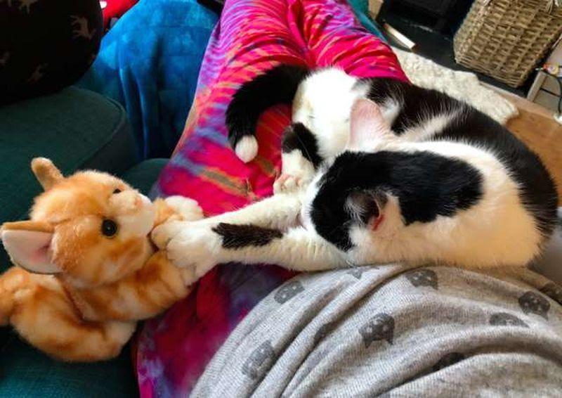 cat-toy-6.jpg