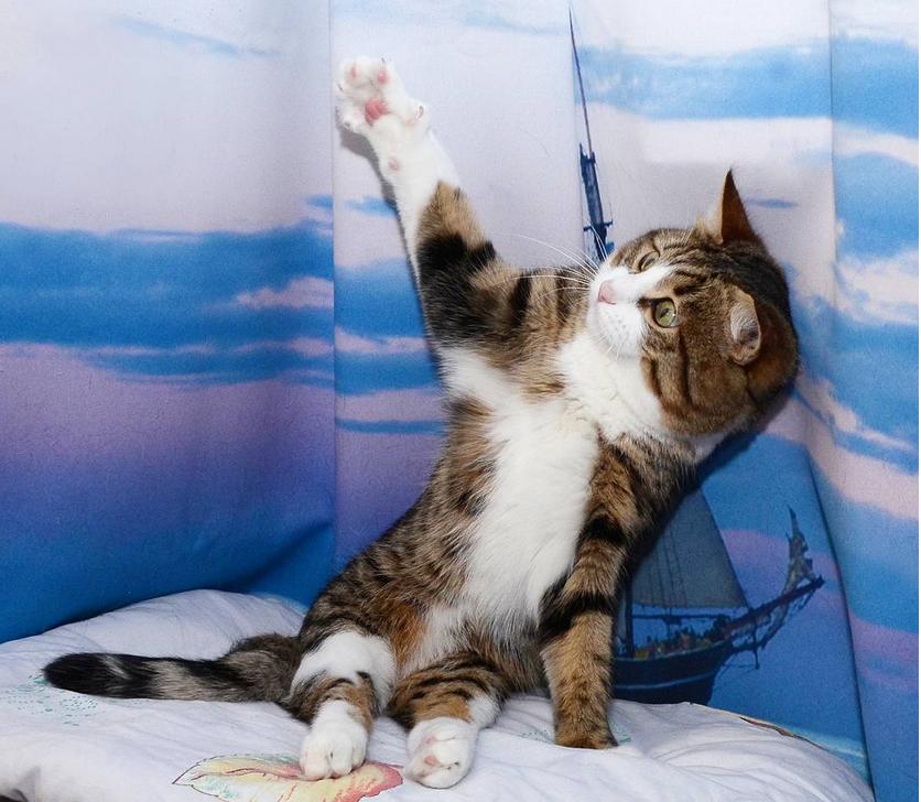 Котик Рекси: питомец с ограниченными возможностями, но невероятной мимикой и душевной добротой. Кото – фото