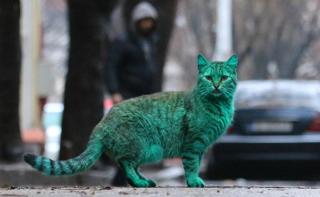 Необычный зеленый кот из Варны: питомец из Болгарии, который вас точно удивит!