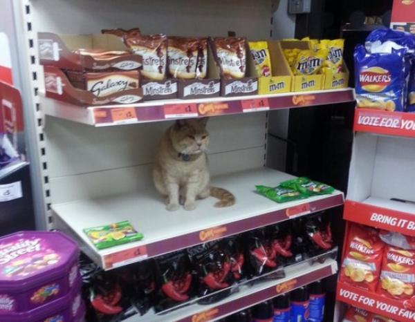 В какую цену котик? Кото – фото подборка питомцев в магазинах – вы точно улыбнетесь!