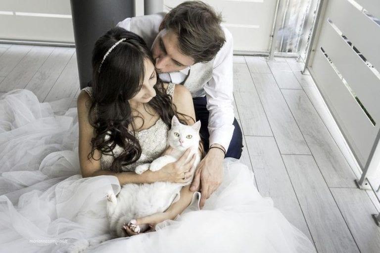 cat_wedding_photos_3-768x512.jpg