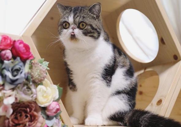 Знакомьтесь, Бокко и Зуу – невероятно милые и смешные котики из Японии. Кото – фото подборка