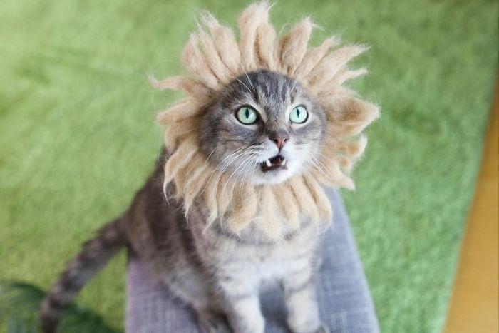 Очаровательные кошечки в шапочках: новые тренды кошачьей моды. Фотоподборка, часть 2