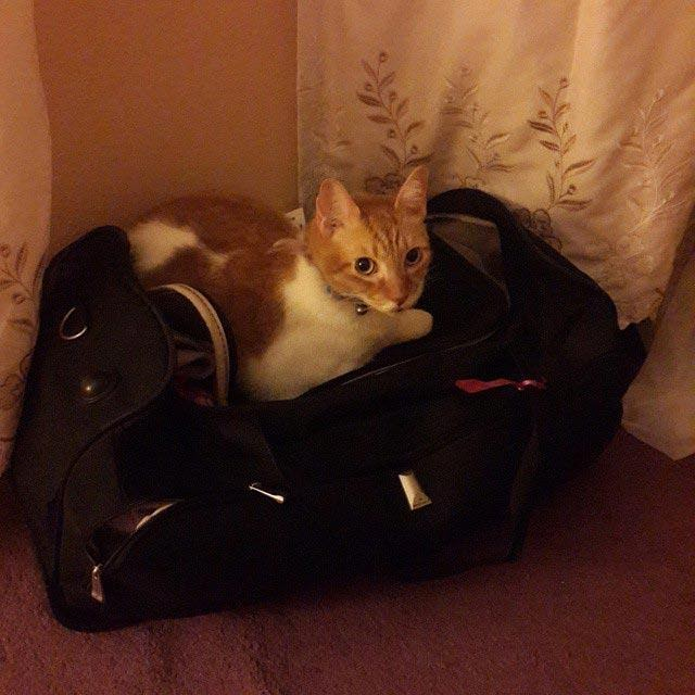 Чертик из табакерки или котик из сумки: питомцы, обожающие прятаться. Кото - фото