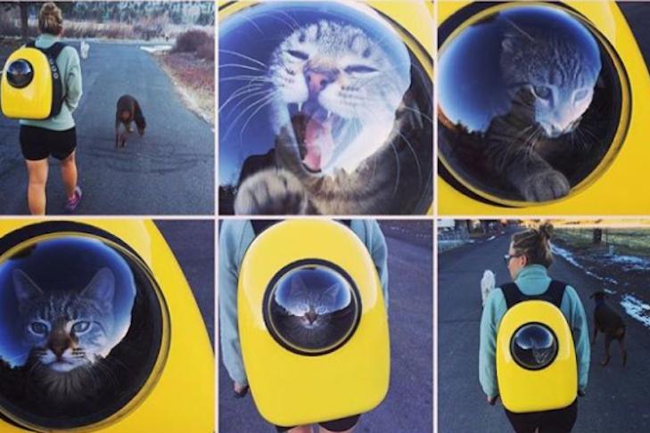 Котики в рюкзаке – переноске с иллюминатором: а вы видели подобное? Кото - фото