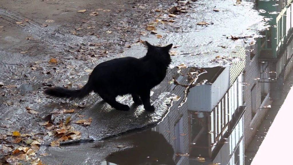 Вопрос – ответ: Почему кошка пьет воду из лужи?