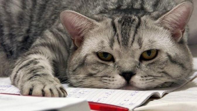 Знаете ли вы, почему нельзя будить котиков? Ответ на один из самых непонятных и интересных вопросов о кошках
