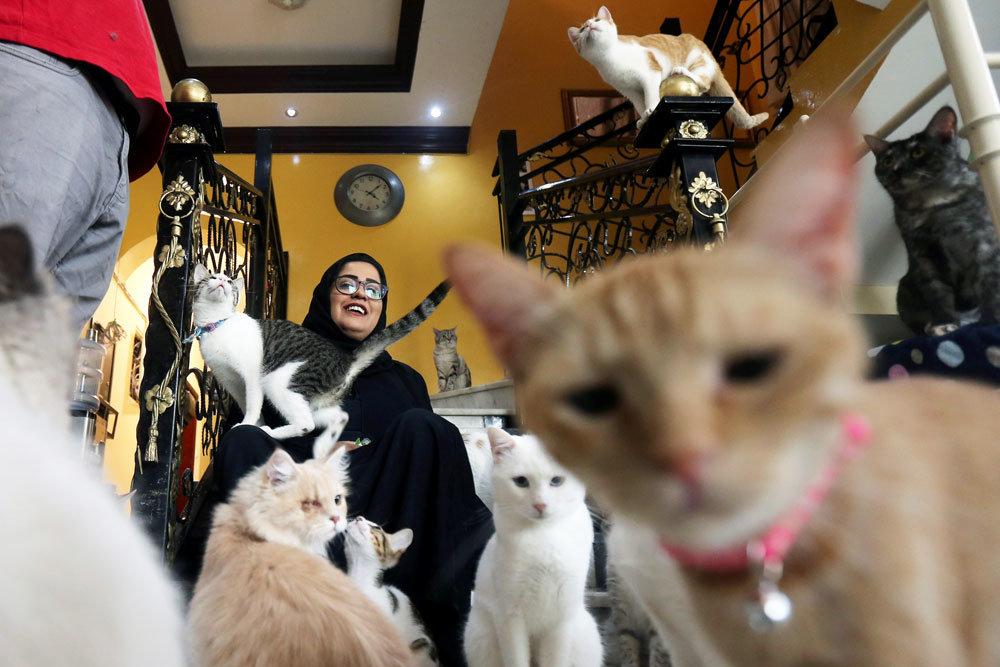 Коты как счетный материал или сколько кошачьих на фотографии? Кото-фото