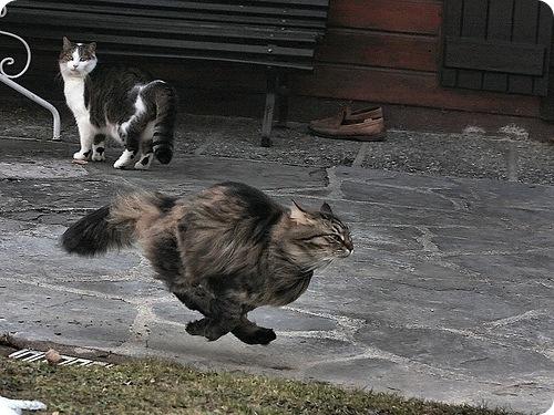 Движение — жизнь. Котэ, стремительно бегущие. Кото-фото