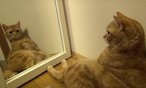 Свет мой, зеркальце, скажи… Кошки, которые отражаются в зеркалах. Статья с фотографиями