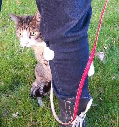 Коты на поводках. Часть вторая. Кото-фото