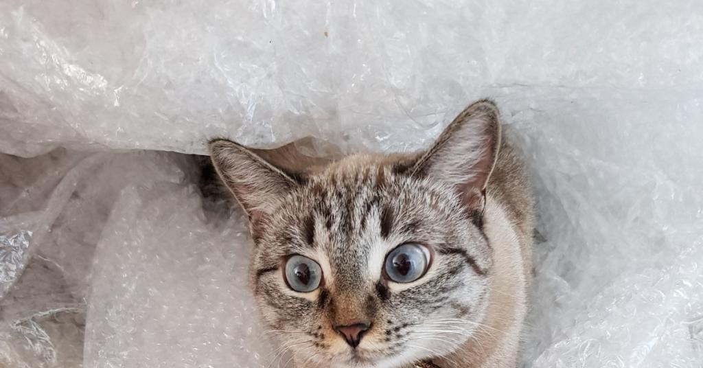 Внешний вид имеет значение или коты в упаковке. Кото-фото