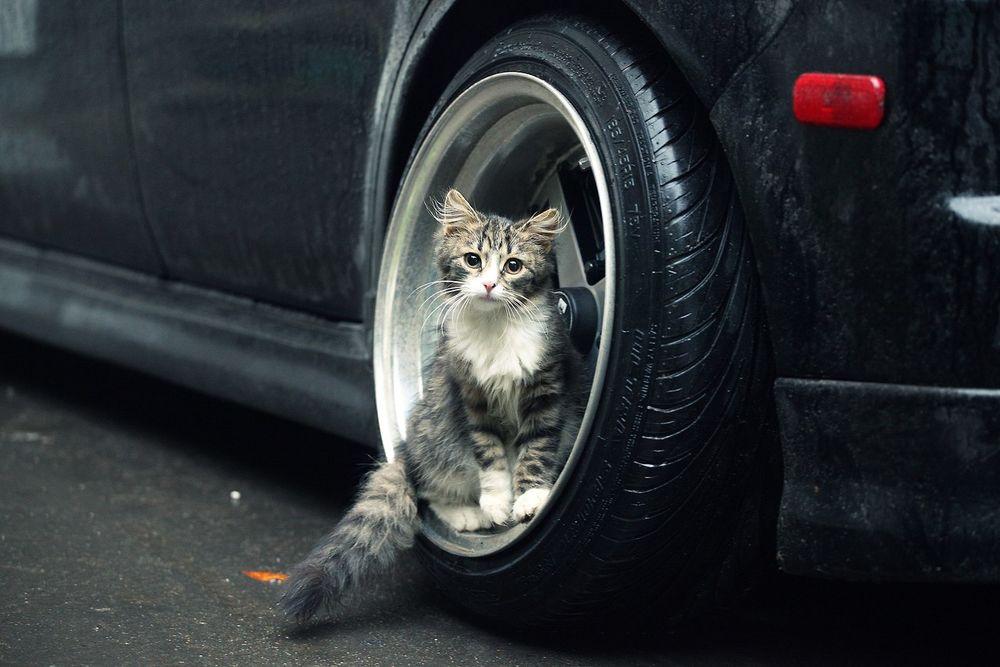 Как белка в колесе. Неутомимые и любопытные котики в разных колесах и ситуациях. Кото-фото