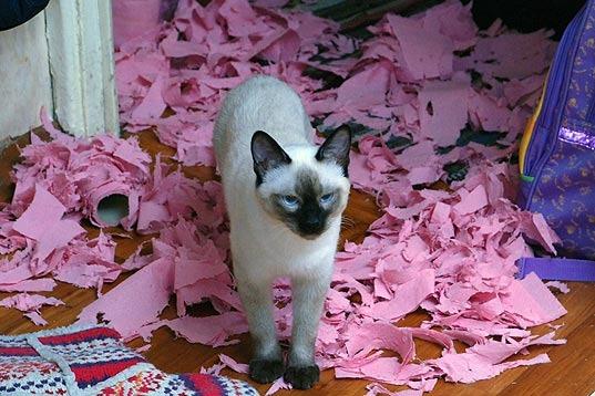 Кошачьи VS туалетная бумага. Кото-фото