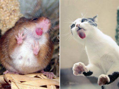 Котики чистят стекло языками. Фотоподборка