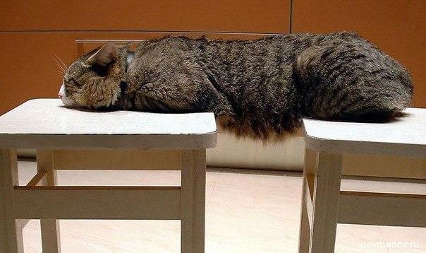 Коты, которые умеют сидеть на двух стульях и не только. Часть первая. Кото-фото